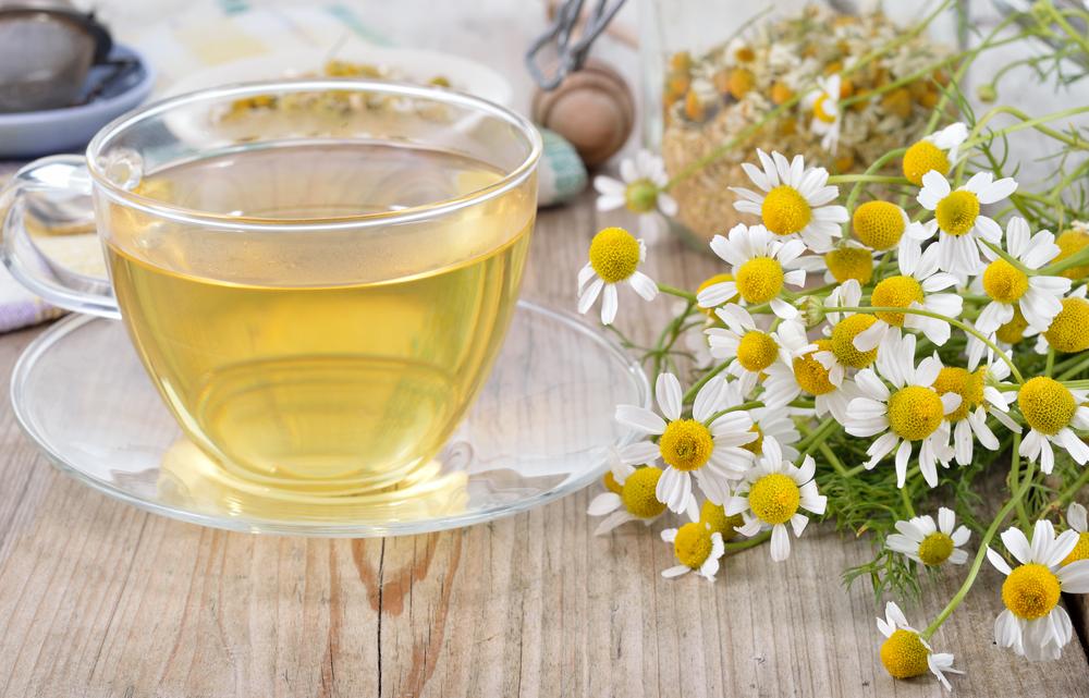 Kamillen-Blüten sind ideal für einen frischen heimischen Tee