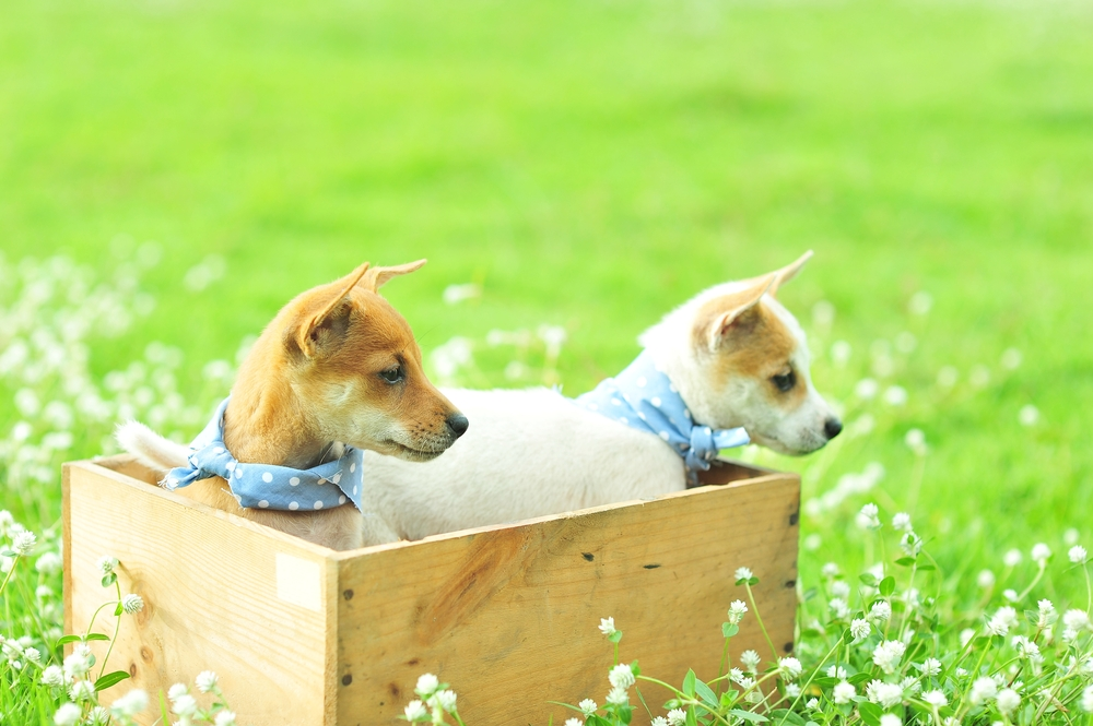 Hundekorb basteln